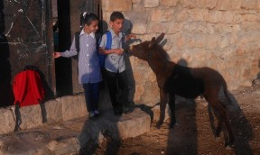 Before going to school, these children in the village of Yanoun feed their donkey, a typical daily chore. Photo EAPPI/I. Maldonado