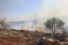 Sadly, a wave of Israeli settler attacks marred the olive harvest this year, as it does many years. Here Israeli settlers set fire to a field of olive trees in Jalud. Photo EAPPI/F. Djurklou.