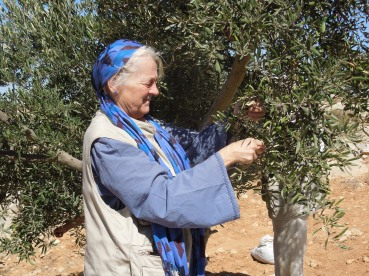 EAPPI observers participate in the olive harvest in Susiya. Often our presence allows farmers to pick their olives in places under threat of settler violence. Photo EAPPI/B. Rubenson.