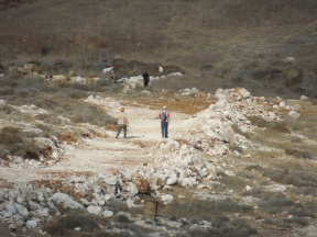 Settlers from Otniel settlement built a new road on land Palestinian shepherd's use to graze their sheep to mark new boundaries for their settlement. Photo EAPPI/B. Rubenson.