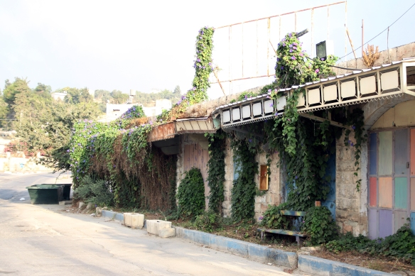 Former Palestinian shops in Shuhada street are now overgrown with plants. Photo EAPPI/J. Schilder, 2010.