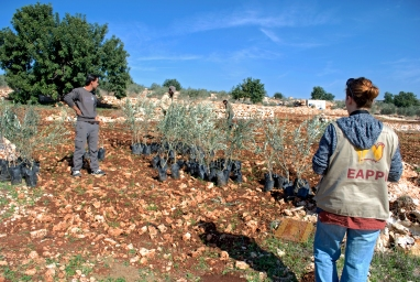 An EA accompanies olive farmers planting trees in Azbat at Tabib. Planting olive trees is a form of nonviolent resistance. Photo EAPPI/J. Byrne.
