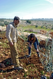 """Palestinian farmers and internationals plant olive trees after Israeli settlers uprooted them in Azbat at Tabib. """"For every one tree they [the Israeli settlers] destroy, we will plant ten trees more"""", Mamoun in Buring says. Photo EAPPI/J. Byrne."""