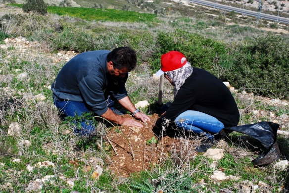 Planting olive trees is an important part of spring for the 80,000 families in Palestine who depend on the olive harvest for income. Photo EAPPI/J. Byrne.