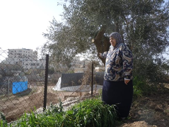 Ferial Abu Haikel overlooking the land her family has tended for decades. Photo EAPPI.