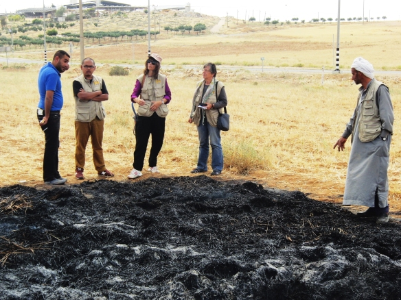 EAs inspect the damage to Khaled's wheat harvest. Photo EAPPI/H. Tyssen.