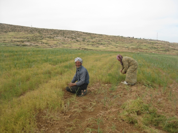 Abu Tariq is happy when he is working in his land. Photo EAPPI/B. Thiel.