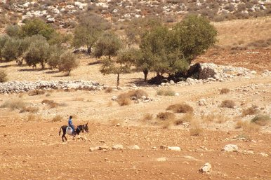 A shepherd boy from Tawayel looks towards a group of Israeli soldiers shading under a tree, 10 September 2014. Photo EAPPI/N. Ray.