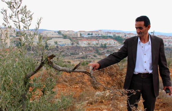 Mahmoud Shawash shows his destroyed olive trees. Photo EAPPI/J. Kaprio.