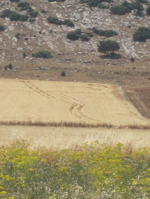 29.04.15 Jordan Valley. Fields destroyed in Khirbet Humsa. Photo EAPPI/P. Hughes