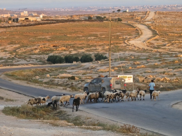 03.07.15. Shepards herding goats monitored by Israeli  army, Photo EAPPI / L. Magne Helgesen