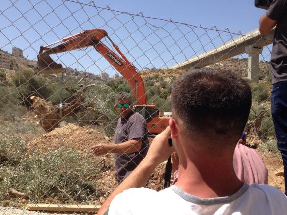 17.08.15 Beit Jala Uprooting of olive trees Photo EAPPI /T. Finstad