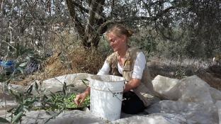 24.10.15, Bethlehem, Husan, protective presence at olive picking, Photo EAPPI/Barbara