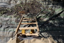 9.10.15, Nablus, Duma, Olive harvest standing on ladder. Photo EAPPI/E. Svanberg