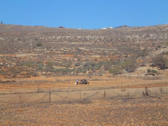 22.12.15 Yanoun. Farming under the settlement outpost. Photo EAPPI/M. Mowe