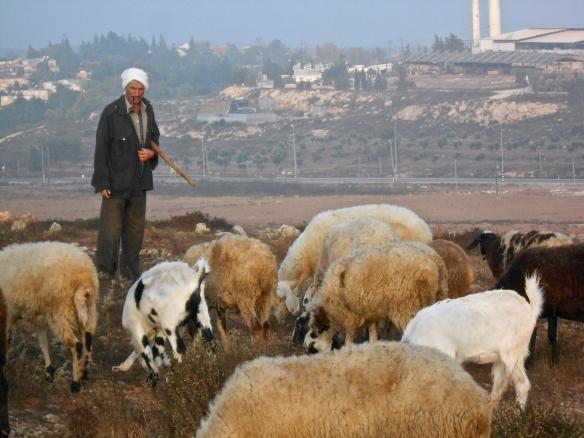 Qawawis Jibrins fields close to Susya illegal settlement. EAPPI L. Hocking. 16.09.16