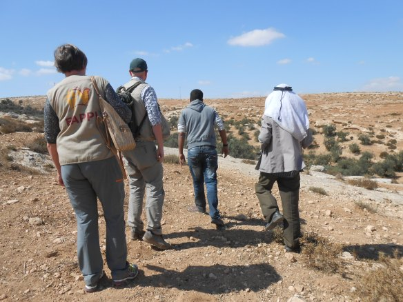 Qawawis Jibrin takes EAs to his olive groves vulnerable to settler attack. EAPPI L. Hocking 26.09.16